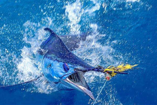 chub-cay-marlin-fishing