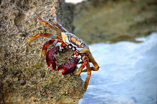 crab fest fresh creek