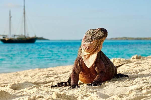 iguana cay exuma bahamas